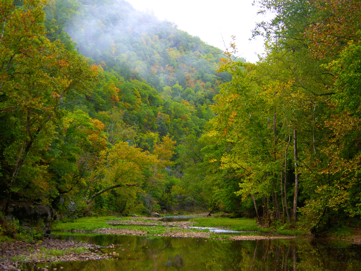 calm river waters surrounded by lush foliage in Arkansas
